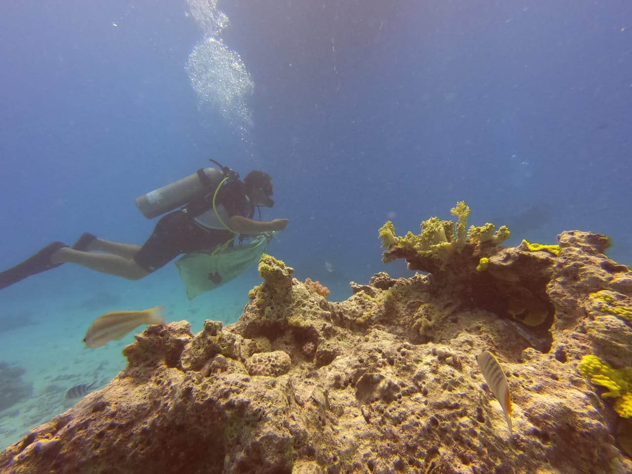 Egyptian wealth threatened as human activities and climate change hurt coral reefs