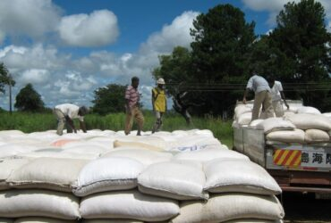 Maize used to relief hunger striken regions in Zambia