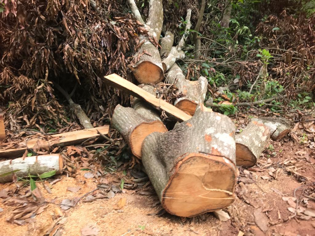 deforestation Nigeria