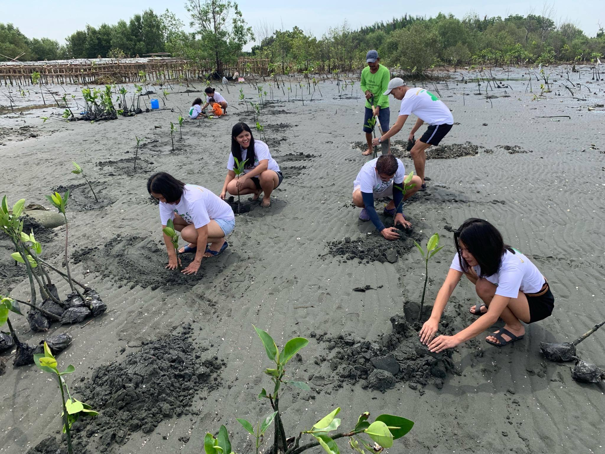 Sowing mangrove seeds of inspiration in the Philippines