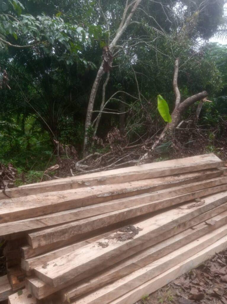 logging nigeria