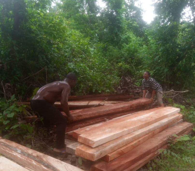 logging Nigeria deforestation