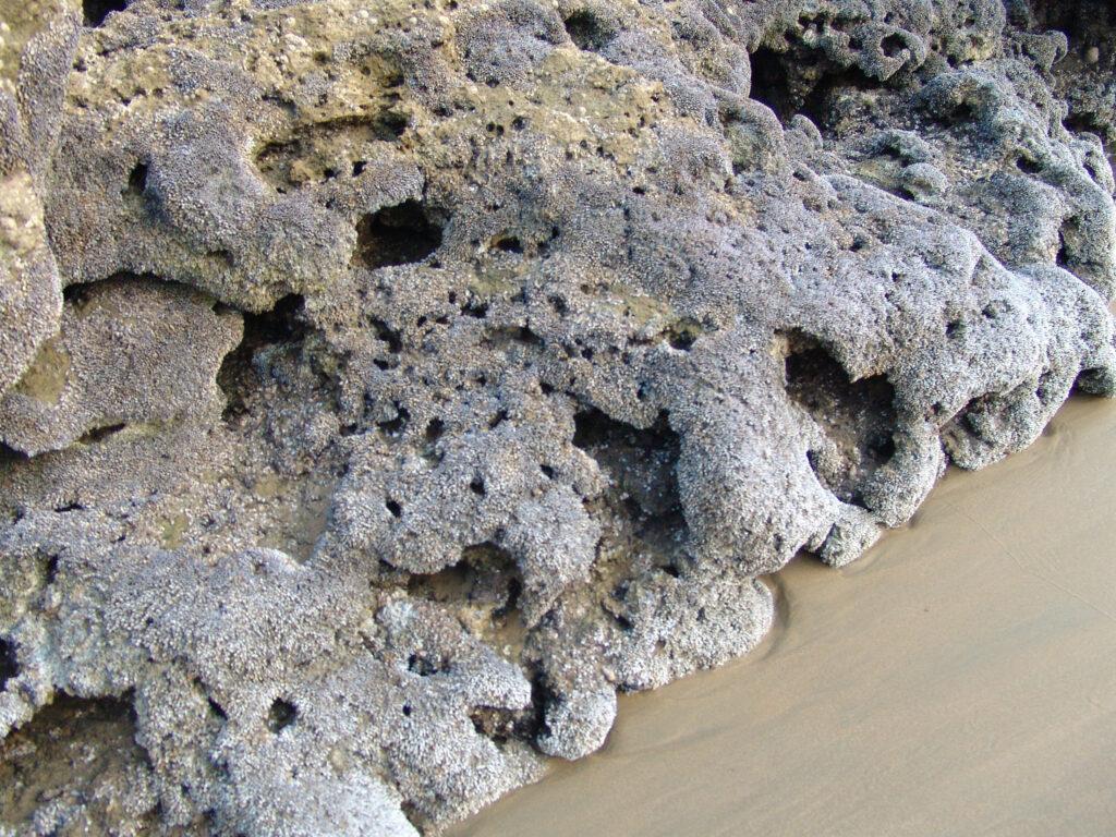 Coral bleaching pakistan