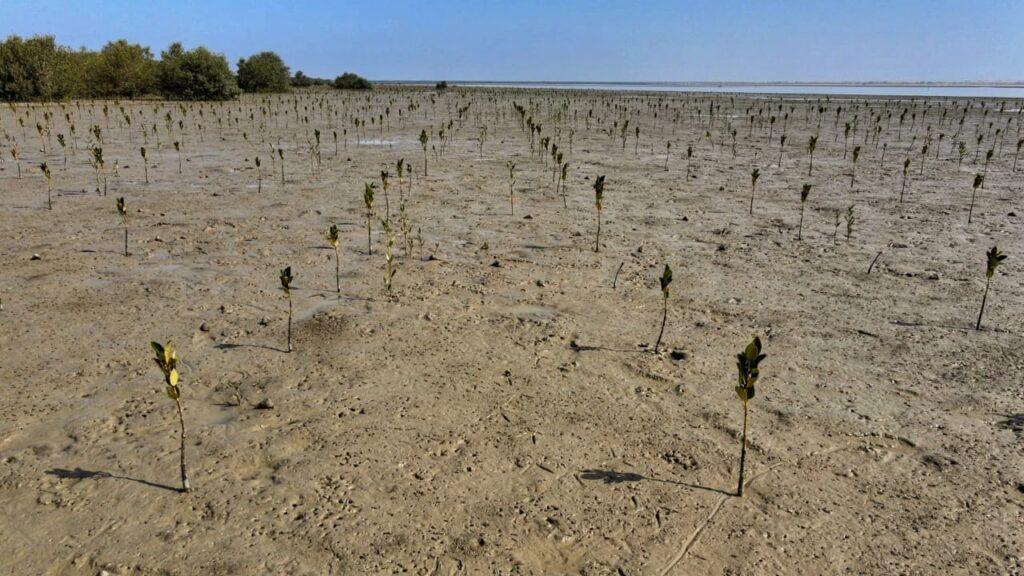 Mangrove-plantation-site-at-Sonmiani-Balochistan