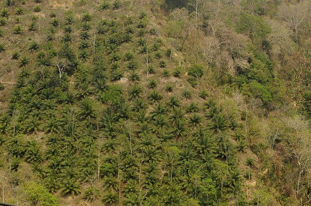 india deforestation