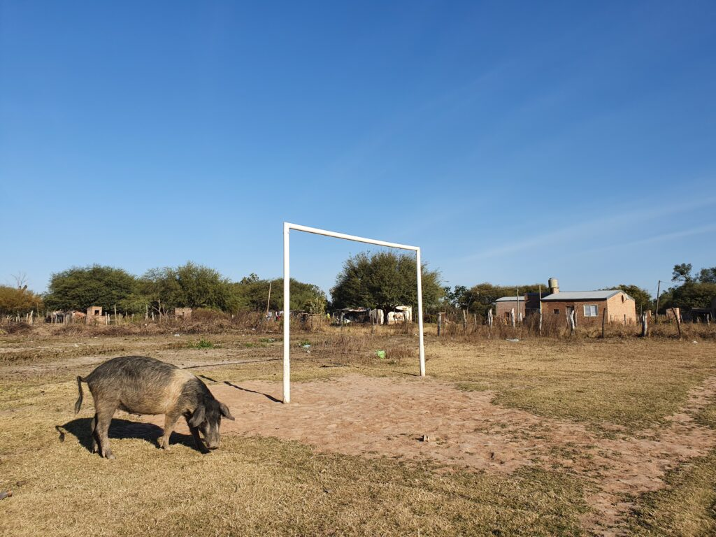Chaco Argentina pigs climate