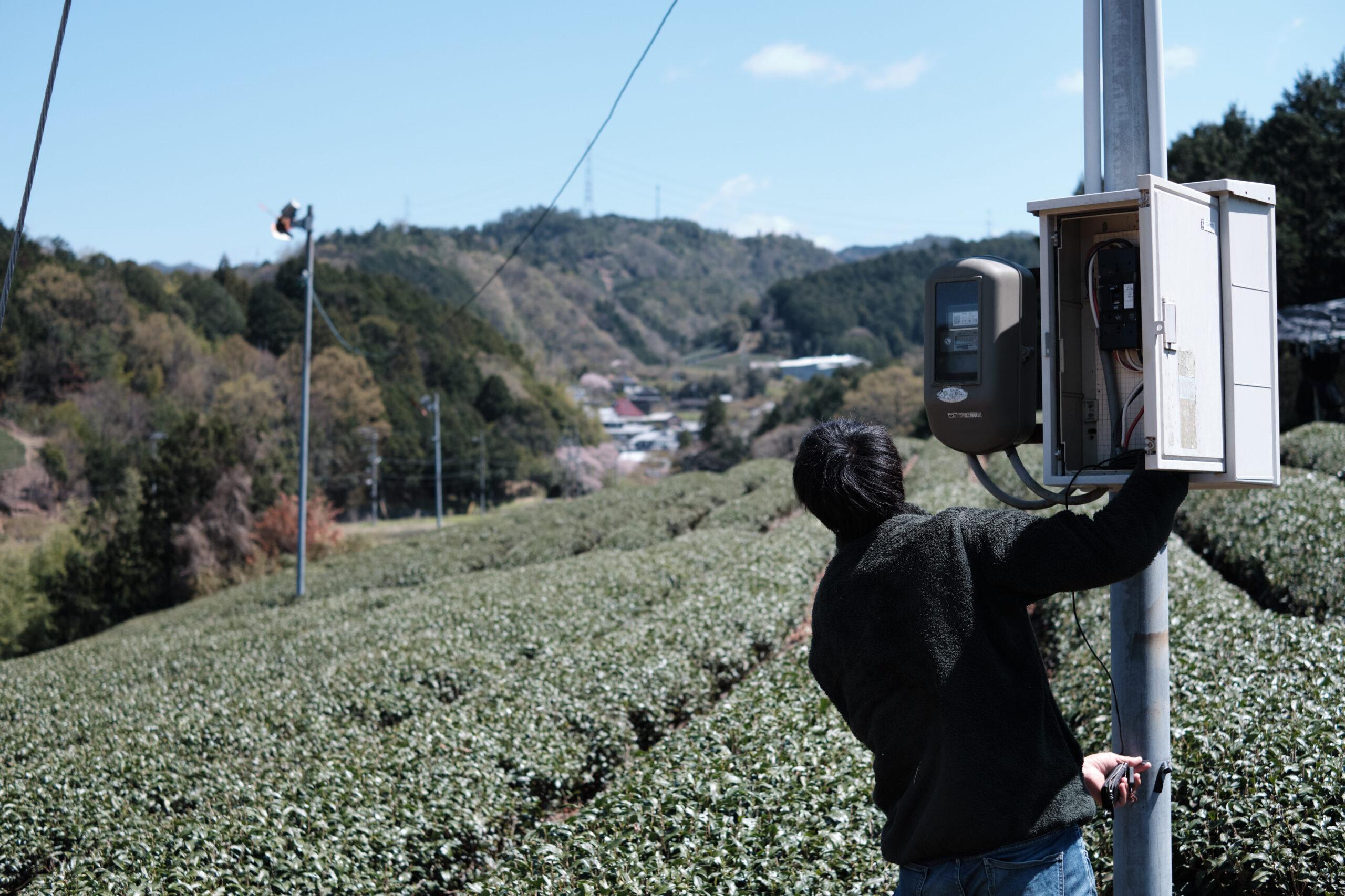 Japan's threatened fields of green