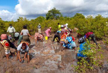 planting mangroves Kenya